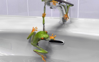 Previous: Frogs in the sink
