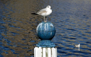 Seagull on pole wallpapers and stock photos