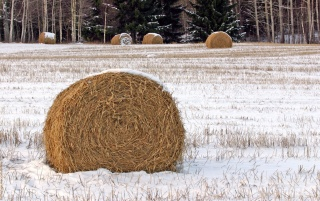 Winter hay bales wallpapers and stock photos