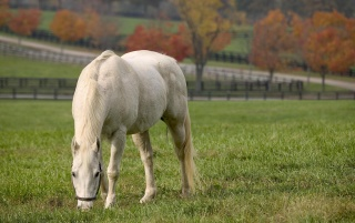 White horse wallpapers and stock photos