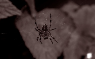 Creepy spider wallpapers and stock photos