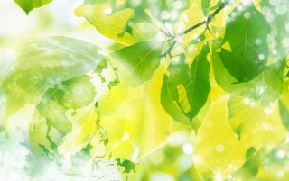 Green leaves bubles wallpapers and stock photos