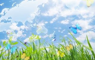 Beautiful butterflies wallpapers and stock photos