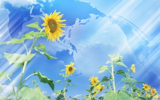 Previous: Sunflower and sky