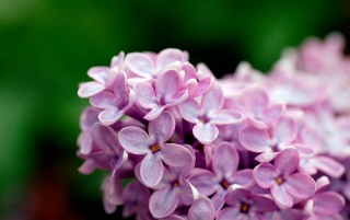 Violet flowers wallpapers and stock photos