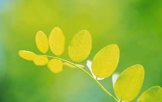 Round yellow leaves wallpapers and stock photos