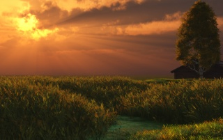 Sunset over field wallpapers and stock photos