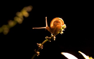Snail in light wallpapers and stock photos