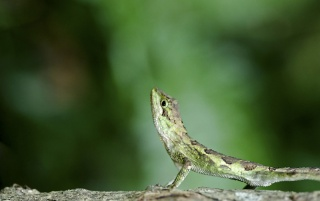 Verde lagarto wallpapers and stock photos