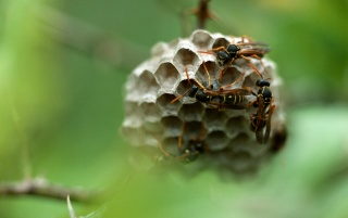Insects honeycomb wallpapers and stock photos