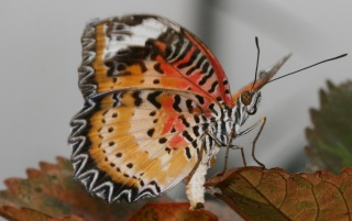 Random: Colorful butterfly