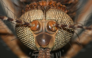 Big insect head wallpapers and stock photos