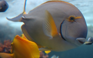 Vista underwater fish wallpapers and stock photos