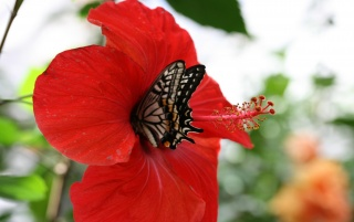 Schmetterling Insel wallpapers and stock photos