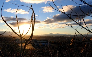 Branches and sunset wallpapers and stock photos