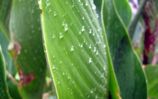 Random: Water On a Green Leaf