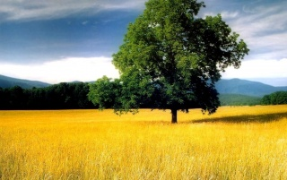 Tree in field wallpapers and stock photos