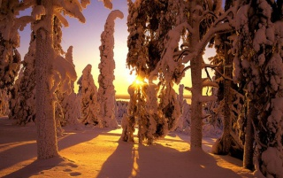 Winter forest view wallpapers and stock photos