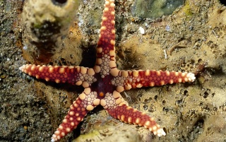 Starfish wallpapers and stock photos