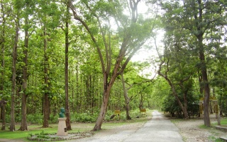 Random: Road TO Jim Corbett