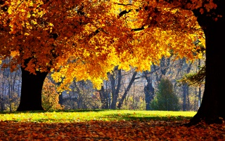 Autumn Falls wallpapers and stock photos