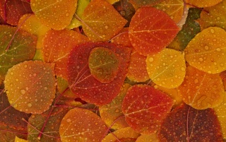 Hojas de Otoño wallpapers and stock photos