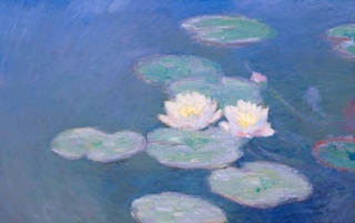 Waterlilies wallpapers and stock photos