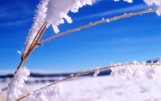 Previous: Frosted nature snow