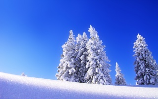 Winter trees blue wallpapers and stock photos