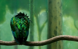 Lonely aves wallpapers and stock photos