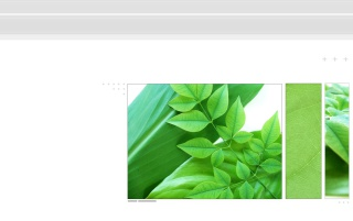 Canopy leafs wallpapers and stock photos