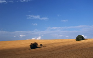 Golden field blue sky wallpapers and stock photos