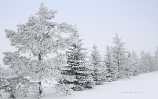 winter wallpapers and stock photos
