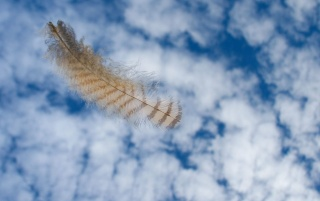 Floating Feather wallpapers and stock photos
