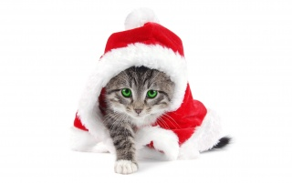 Santa is a cat wallpapers and stock photos