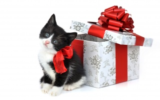 Cat as a present wallpapers and stock photos