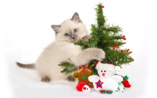 Cat with Christmas tree wallpapers and stock photos