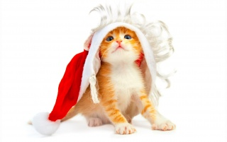 Cat wants to be Santa wallpapers and stock photos