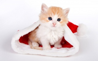 Cute cat in Santa hat wallpapers and stock photos