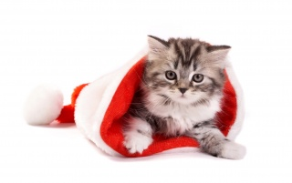 Fluffy cat in Santa hat wallpapers and stock photos