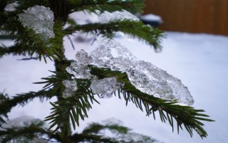 Icey Christmas Tree wallpapers and stock photos