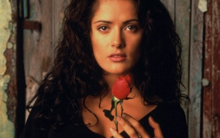 Salma Red Rose wallpapers and stock photos