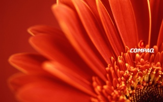 Compaq Vista Flower wallpapers and stock photos