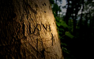 Love on tree wallpapers and stock photos