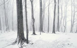 Winter in the forest wallpapers and stock photos