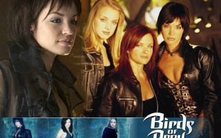 Birds of prey wallpapers and stock photos