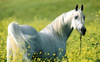 Random: Horse in the field