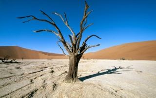 Namib-naukluft Park wallpapers and stock photos