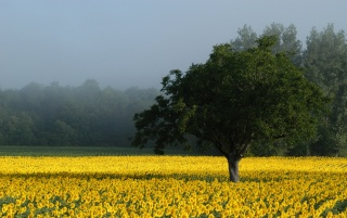 Previous: Yellow field