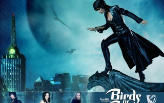 Birds of Prey blue wallpapers and stock photos